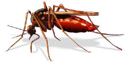 Dịch vụ diệt muỗi hiệu quả quận Nam Từ Liêm
