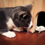Cách bẫy chuột trong nhà hiệu quả