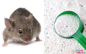 Cách đuổi chuột dân gian