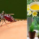 cách đuổi muỗi hiệu quả