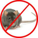 cách diệt chuột hiệu quả