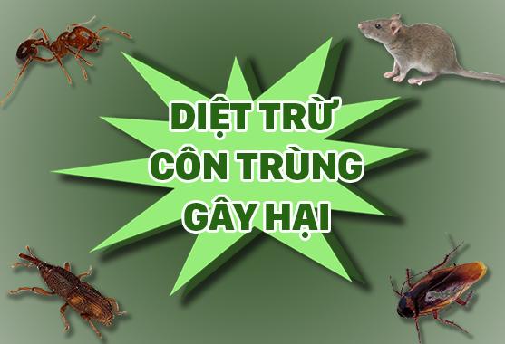 dich-vu-diet-con-trung-tai-nha-gia-re