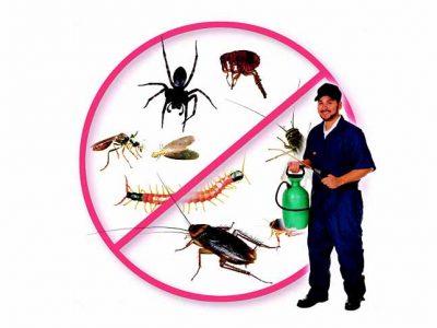 Dịch vụ phun muỗi uy tín, hiệu quả, không độc hại quận Hoàn Kiếm