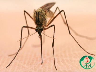 Phương pháp phun thuốc diệt muỗi mang thương hiệu An Nam