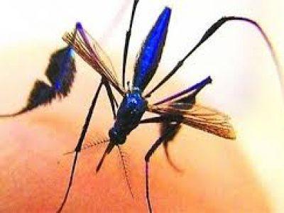 Dịch vụ phun muỗi uy tín, hiệu quả, không độc hại quận Ba Đình
