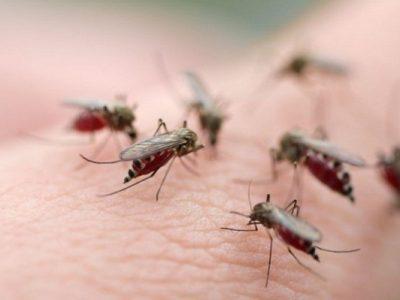 Dịch vụ phun muỗi uy tín, hiệu quả, không độc hại quận Đống Đa