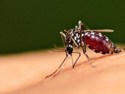 Dịch vụ phun muỗi uy tín, hiệu quả, không độc hại quận Long Biên